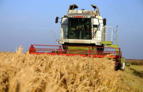 O firma din Satu Mare, in TOP-ul cultivatorilor. Afaceri de 1,6 miliarde de lei