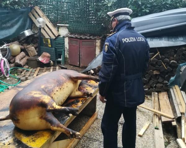 Patru români ar putea ajunge la închisoare pentru că au tăiat un porc în curte