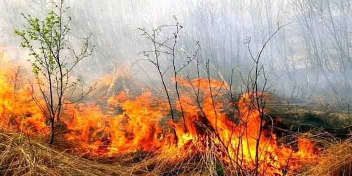 Incendiu pe strada Caprioarei