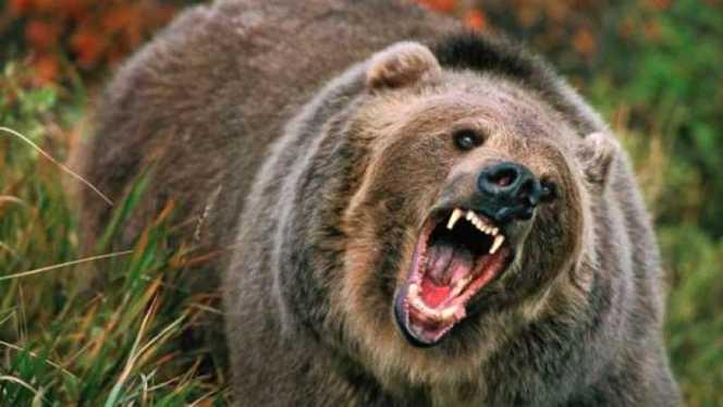 S-a dus la cules de ciuperci si a fost atacata de un urs
