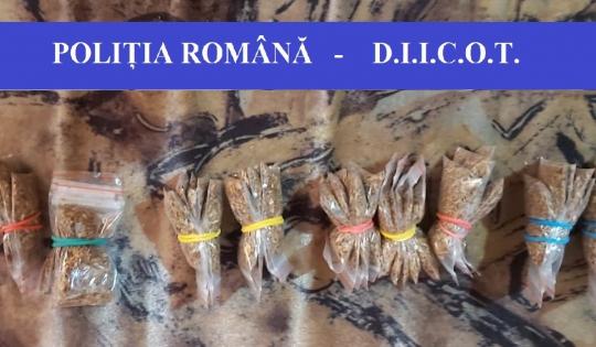 Mascatii din Satu Mare, în acțiune. 15 traficanti de droguri, retinuti (Foto)