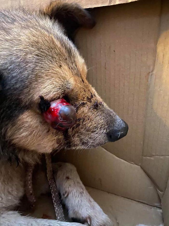 Câine chinuit în ultimul hal. Cum a fost găsit ? (Foto)