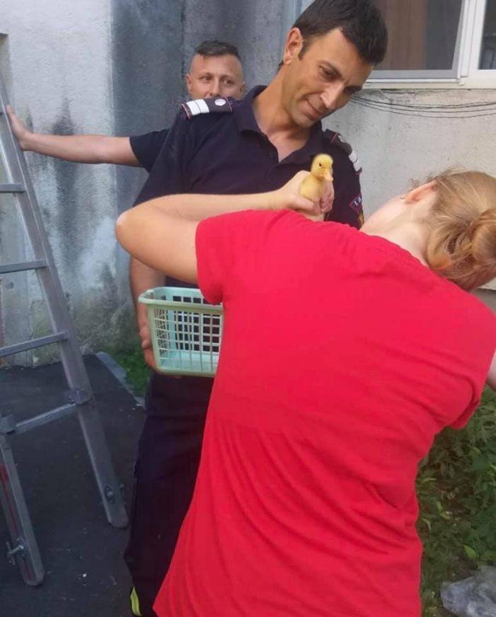 Misiune inedita pentru pompieri. Au salvat un pui de rata ! (Foto)