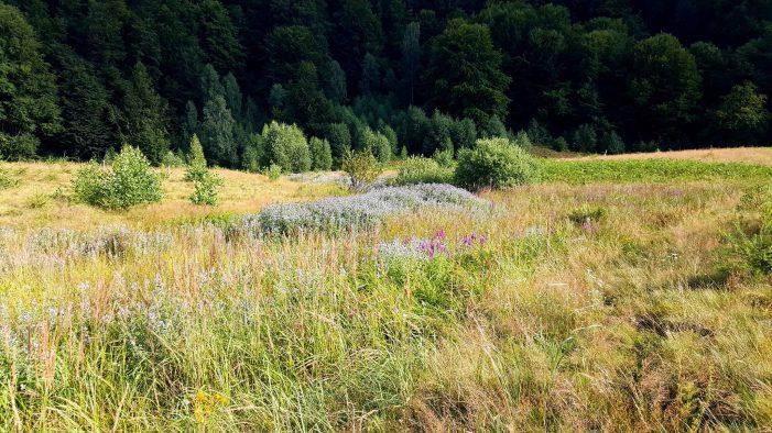 Valea Mentolata, un loc unic în Romania. Se afla în Tara Oasului (Foto)