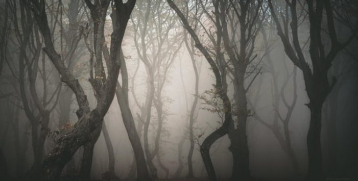"""Oamenii ii spun """"Triunghiul Bemudelor din Romania"""". Este cea mai înfricoșătoare pădure din lume ! (Foto)"""