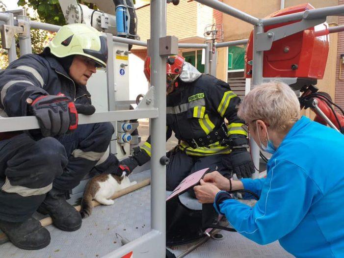 Cum a fost salvată pisica prăbușită în gol de la etajul 6 ? (Foto)