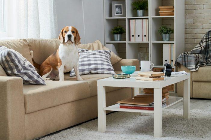 Cum poți scoate mirosurile neplăcute din mobilier