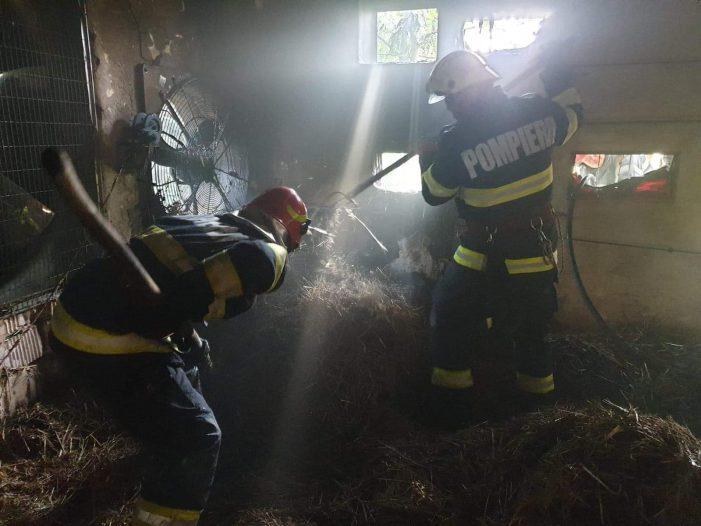 Ce pagube a făcut incendiul de la hala cu pui (Foto)