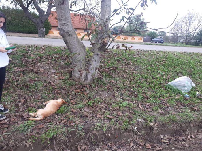 Catelusa otrăvită și lăsată sa moara în strada (Foto)
