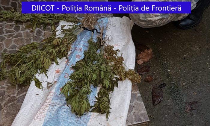 Perchezitii într-un dosar de trafic de droguri. Un bărbat arestat