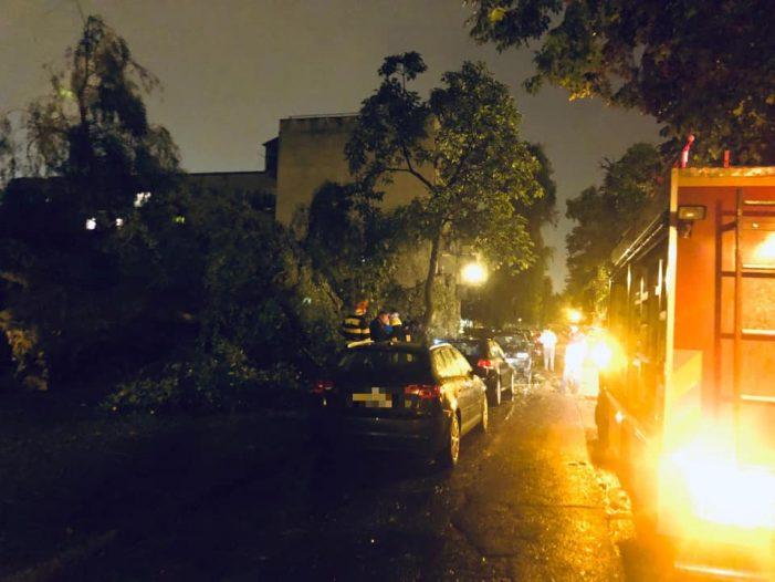 Copac prabusit pe o strada din Satu Mare