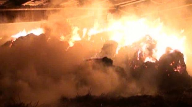Incendiu la o hala cu pui, in Botiz