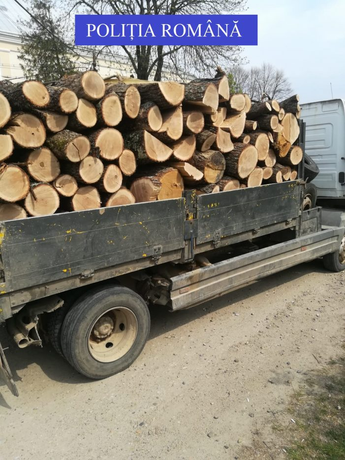 Prins cu lemnele furate în remorca (Foto)