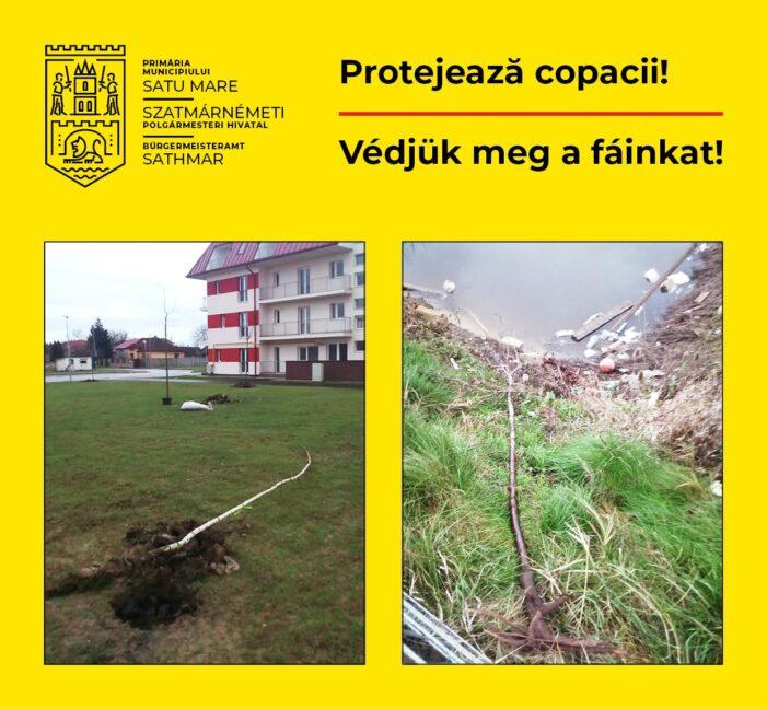 Puietii nou plantati in oras, distrusi