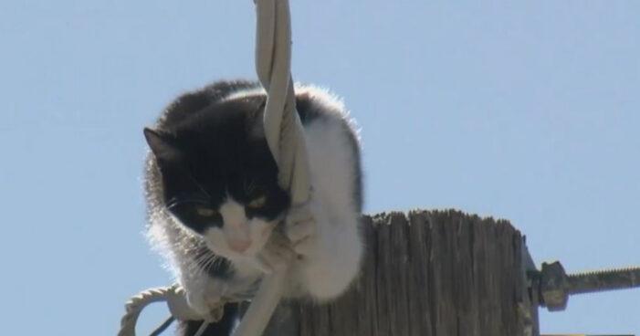 Pisica blocata pe un stalp. Pompierii intervin
