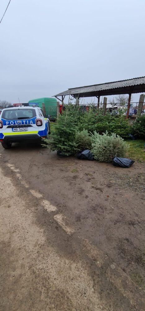 Sute de brazi de Craciun, confiscati de polițiști