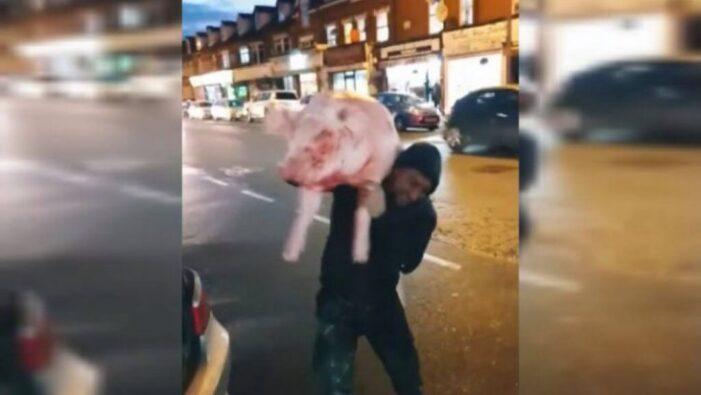 Cu porcul taiat, la plimbare pe strazile Londrei (Foto)