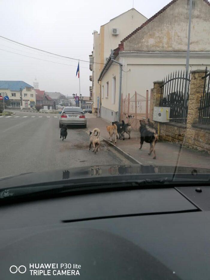 Haite de câini în centrul Tasnasdului (Foto)