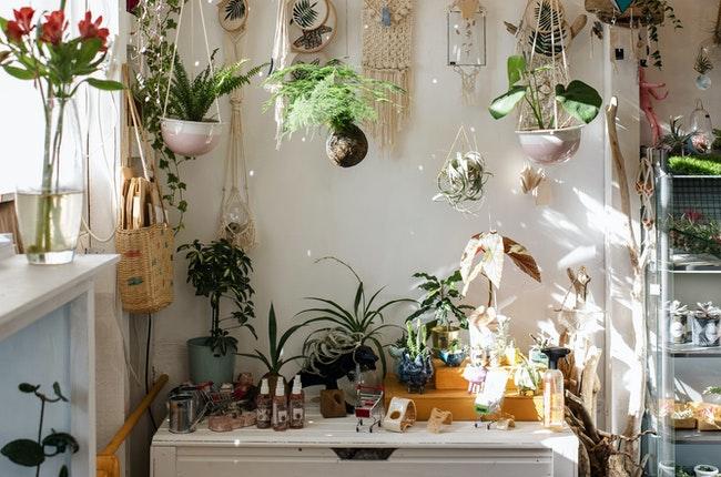 Trucuri utile pentru îngrijirea si hranirea plantelor de interior. Metode vechi și eficiente