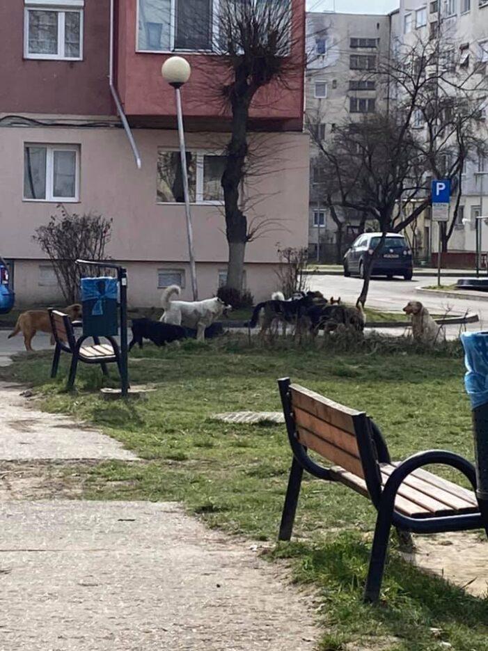 Haita de câini vagabonzi într-un parc din Satu Mare (Foto)