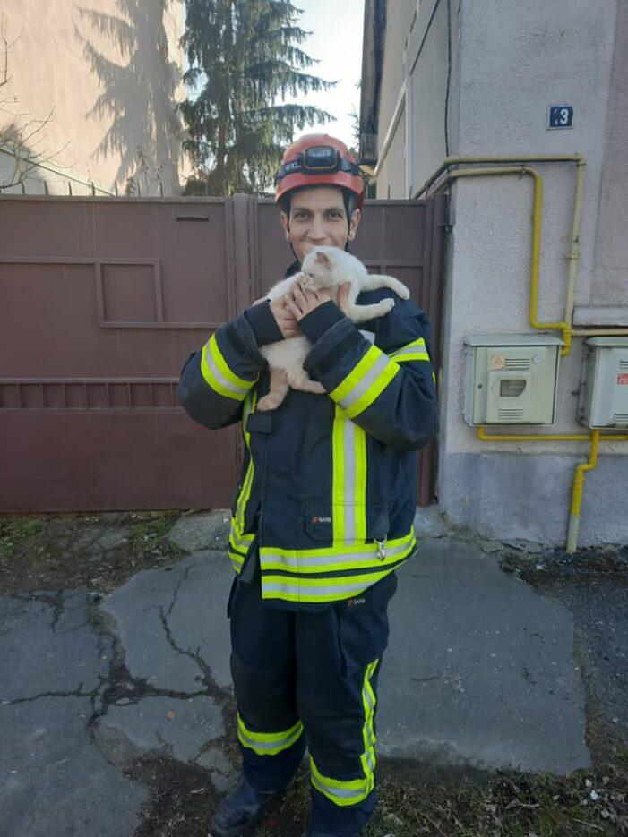 Pisică salvată de pompierii sătmăreni (Foto)