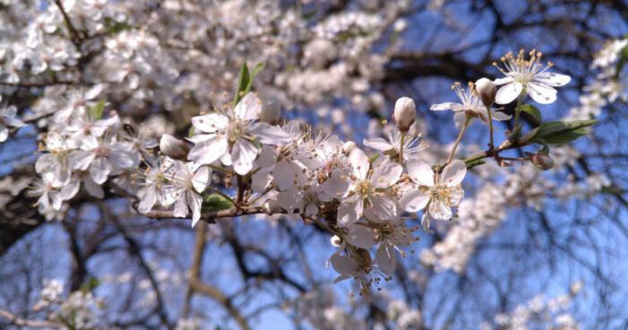 Începutul primăverii astronomice. Semnificații și ce anunță astrele