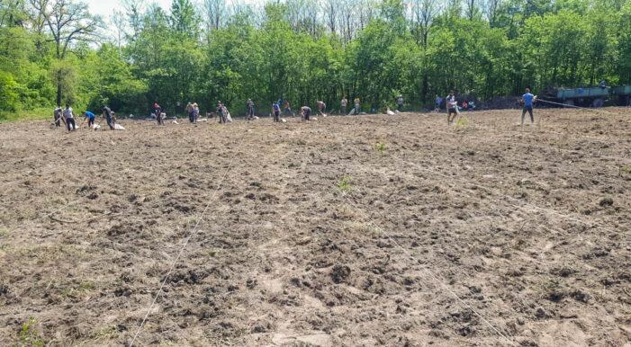 S-au plantat 5 hectare de pădure pe dunele de nisip de la Foieni