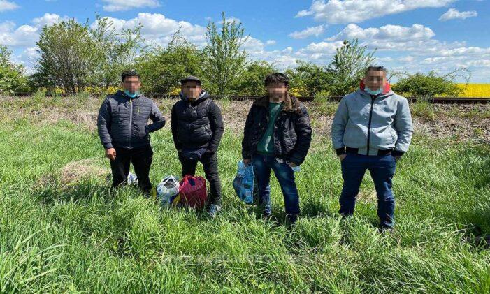 Patru migranti prinși lângă Carei (Foto)