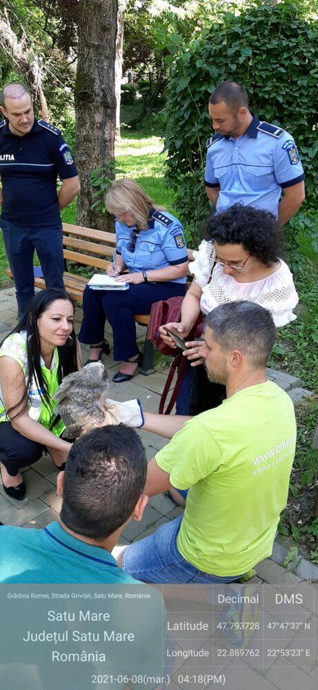 Bufnița cazuta din cuib, în Grădina Romei (Foto)