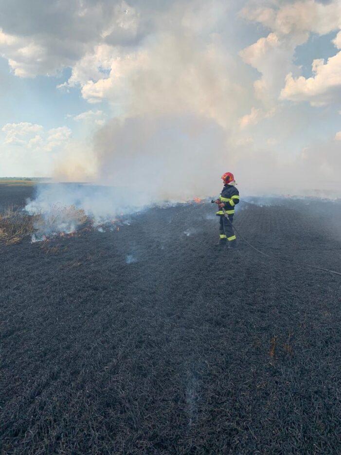 Incendiu intr-un lan de grau (Foto)