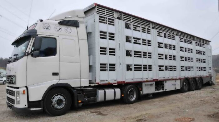Transporturile de animale de lungă durată, suspendate temporar pe perioada caniculei