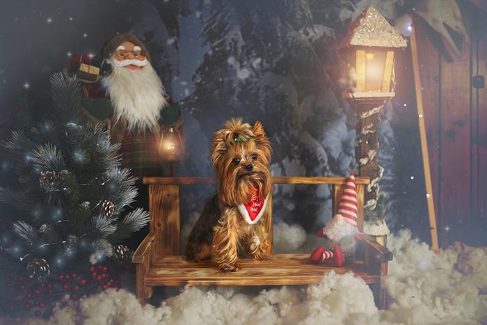 Cum alegi cel mai bun brad de Crăciun pentru casa ta