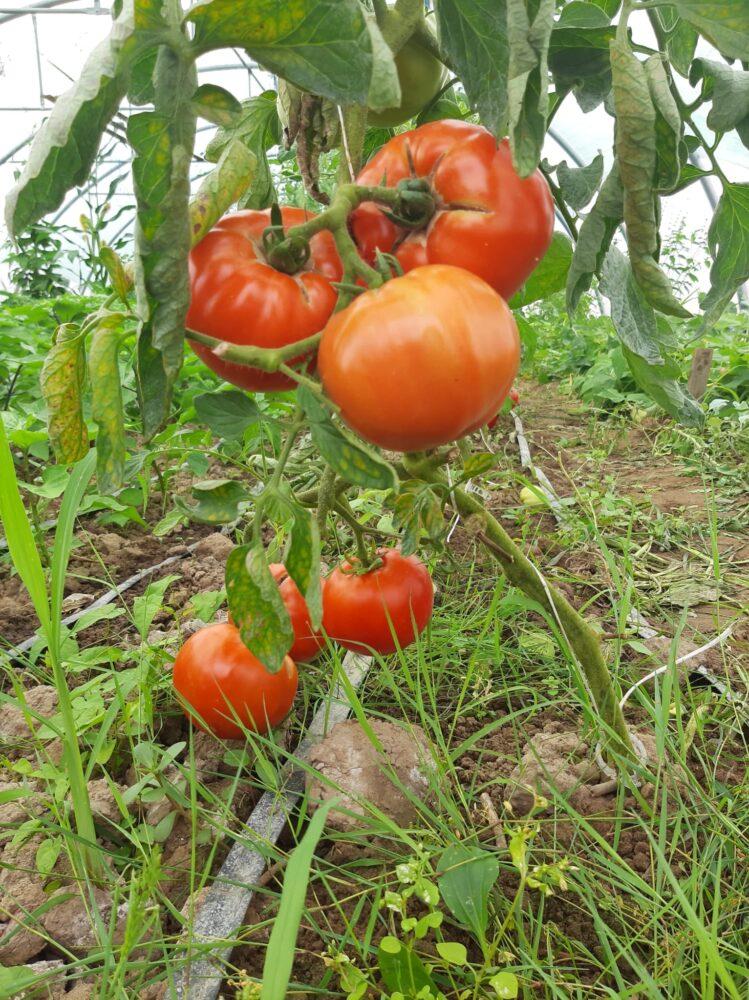 "15 cosuri cu legume proaspete culese din Gradina ""Stea"""