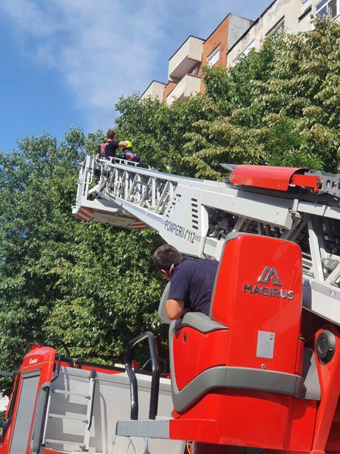 Intervenție mai deosebită pentru pompierii sătmăreni (Foto)