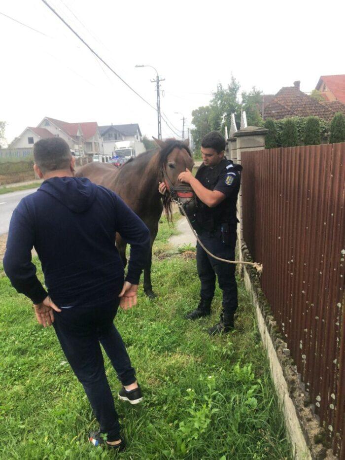 Accident evitat. Un cal alerga pe sosea (Foto)