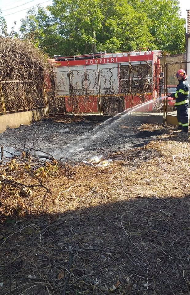 Incendiu de vegetatie uscata la Carei (Foto)
